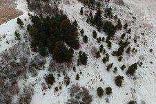 MAX_0008 wolf and elk resized.jpg